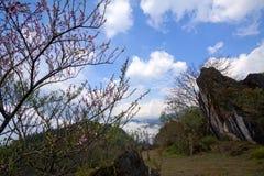 Ajardine com flores do pêssego, montanhas e o céu azul Imagens de Stock