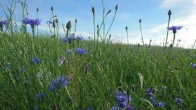Ajardine com flores e o céu azuis sobre ele Foto de Stock Royalty Free