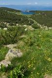 Ajardine com flores e o lago amarelos Bezbog, montanha de Pirin Fotografia de Stock Royalty Free