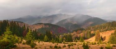 Ajardine com a floresta colorida iluminada pela luz solar dentro nas montanhas Imagem de Stock