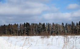 Ajardine com floresta conífera atrás de um campo coberto de neve em um dia de inverno ensolarado frio sob o céu azul com nuvens b Imagens de Stock Royalty Free