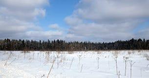 Ajardine com floresta conífera atrás de um campo coberto de neve em um dia de inverno ensolarado frio sob o céu azul com nuvens b Imagens de Stock