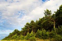 Ajardine com a floresta da árvore dos sylvestris do pinus do pinho escocês ou escocês que cresce em dunas na costa de mar Báltico Imagem de Stock