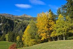 Ajardine com a floresta decíduo em cores da folha do outono Imagem de Stock Royalty Free