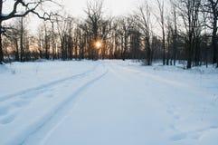 Ajardine com floresta do inverno e os raios do sol Imagens de Stock