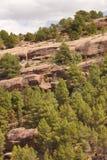 Ajardine com floresta do pinheiro e as rochas enormes na Espanha Imagem de Stock Royalty Free