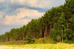 Ajardine com a floresta do pinheiro que cresce em dunas na costa de mar Báltico Imagens de Stock Royalty Free