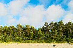 Ajardine com a floresta do pinheiro que cresce em dunas na costa de mar Báltico e nas nuvens de cúmulo brancas no céu azul Imagens de Stock Royalty Free