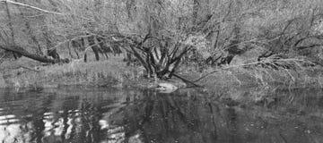 Ajardine com floresta e lago no tempo do outono spain Imagens de Stock