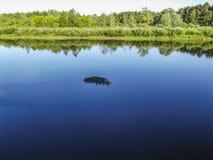 Ajardine com floresta e um rio na parte dianteira Cenário bonito Fotografia de Stock