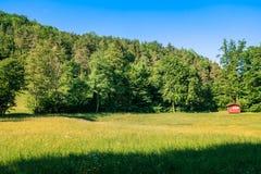 Ajardine com floresta grande e uma casa vermelha Imagens de Stock