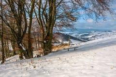 Ajardine com a floresta na folha vermelha no dia de inverno ensolarado Imagens de Stock