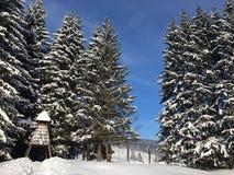 Ajardine com a floresta nevado do inverno e o céu azul Imagens de Stock Royalty Free
