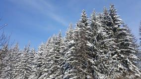 Ajardine com a floresta nevado do inverno e o céu azul Foto de Stock