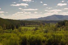 Ajardine com a floresta no fundo das montanhas de Ural Imagens de Stock