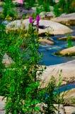 Ajardine com floresta, rio e pedras em Ucrânia Imagens de Stock Royalty Free