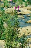 Ajardine com floresta, rio e pedras em Ucrânia Fotografia de Stock Royalty Free