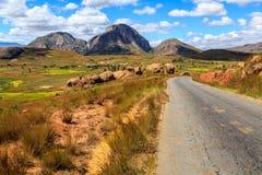 Ajardine com formação da estrada e de rocha em Madagáscar central Fotos de Stock