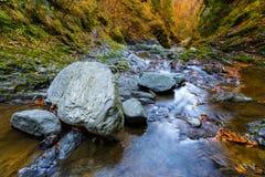 Ajardine com a garganta e o rio de Stan do lui de Valea em Romênia, no th Fotos de Stock
