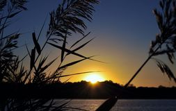 Ajardine com grama selvagem e por do sol bonito sobre o lago Fotos de Stock