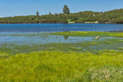 Ajardine com grama verde e em torno do lago Bezbog, montanha de Pirin Foto de Stock Royalty Free