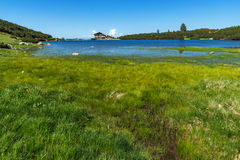 Ajardine com grama verde em torno do lago Bezbog, montanha de Pirin Fotos de Stock