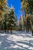 Ajardine com grande natureza Siberian, Altai, Rússia Foto de Stock Royalty Free