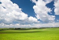 Ajardine com horizonte Foto de Stock