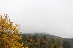 ajardine com horizonte visível em um dia nevoento de novembro com indi Fotografia de Stock