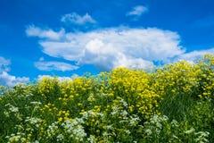Ajardine com hortaliças luxúrias, flores amarelas em um céu azul com nuvens Foto de Stock Royalty Free