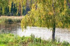 Ajardine com a imagem do rio e da natureza circunvizinha Fotos de Stock Royalty Free