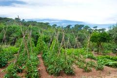 Ajardine com jardim vegetal Foto de Stock