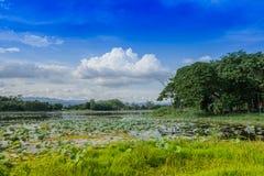 Ajardine com lago com nuvens brancas e um céu azul Foto de Stock Royalty Free