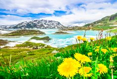Ajardine com lago da geleira e dente-de-leão do bloomin em Noruega Fotografia de Stock Royalty Free