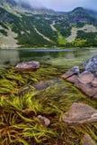 Ajardine com lago e grama verde na montanha Imagens de Stock