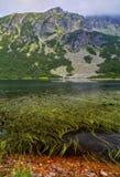 Ajardine com lago e grama verde na montanha Foto de Stock