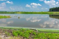 Ajardine com lago Kozachy Liman na vila de Chernetchina, Ucrânia Imagem de Stock