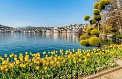 Ajardine com lago Lugano e as tulipas coloridas na flor do parque de Ciani na primavera Imagem de Stock Royalty Free