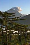 Ajardine com larício e montanhas no fundo. Foto de Stock Royalty Free