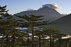 Ajardine com larício e montanhas no fundo. Fotografia de Stock Royalty Free