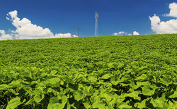 Ajardine com linha aérea elétrica de alta tensão no campo verde Foto de Stock Royalty Free