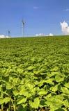 Ajardine com linha aérea elétrica de alta tensão no campo verde Fotografia de Stock Royalty Free