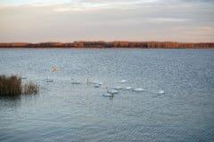 Ajardine com linha de flutuação, juncos, pássaros e vegetação Foto de Stock Royalty Free