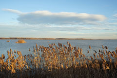 Ajardine com linha de flutuação, juncos, pássaros e vegetação Fotos de Stock