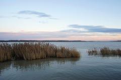 Ajardine com linha de flutuação, juncos, pássaros e vegetação Fotografia de Stock Royalty Free