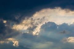Ajardine com luz dramática Fotos de Stock