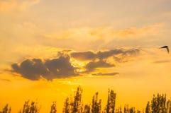 Ajardine com luz dramática Fotografia de Stock