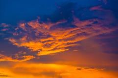Ajardine com luz dramática Imagem de Stock