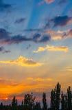 Ajardine com luz dramática Imagem de Stock Royalty Free