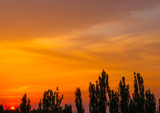 Ajardine com luz dramática Foto de Stock Royalty Free